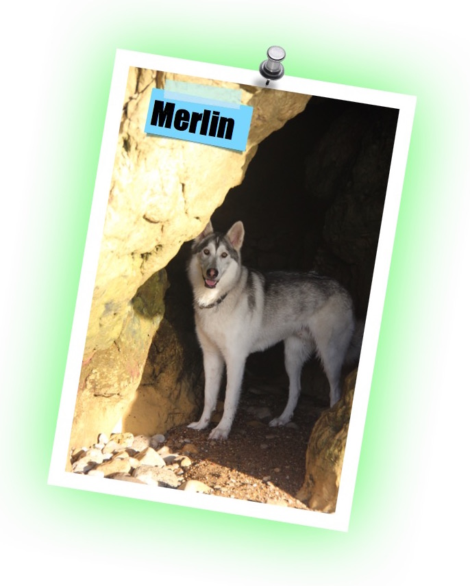 Merlin review