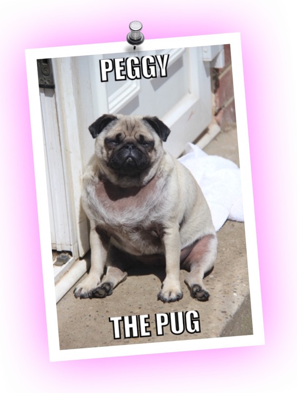 Peggy Pug review